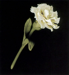 A Lladro carnation sculpture