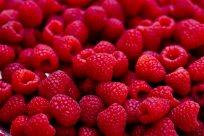 raspberries-04